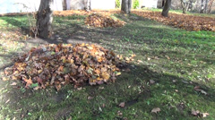 dry leaf pile to the house leaves covered meadow autumn work - stock footage