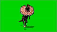 Dinosaurs dilophosaurus runs - green screen Stock Footage