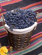 basket with blue grapes - stock photo