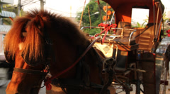 Horse In Lampang, Thailand Stock Footage
