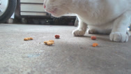 Stock Video Footage of Cat eating dry food