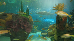 Large Sharks and colorful tropical fish swim in a coral reef - stock footage