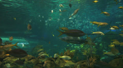 Sharks cruise through colorful schools of tropical fish - stock footage