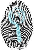 Fingerprint - Search - stock photo