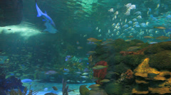 Schools of colorful tropical fish with sharks cruising through Stock Footage