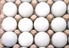 Dozen eggs - stock photo