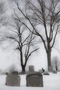 Cemetery with tombstones and trees B&W in Winter Stock Photos