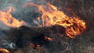 Stock Video Footage of Burning grass in the steppe