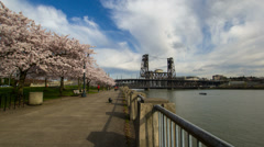 Flowering Cherry Blossom Trees Spring along Willamette River in Portland Oregon Stock Footage