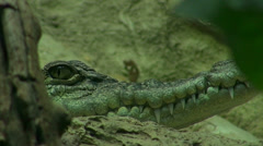 Head of crocodile discovered in the dark Stock Footage
