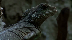 Lizard discovered in the dark Stock Footage