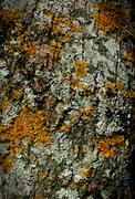 Stock Photo of moss bark wooden texture for your design