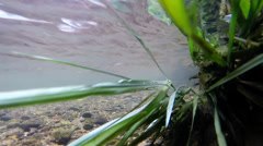 Grass waving in the flow of a small river Stock Footage