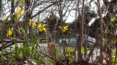 Daffodils & Traffic - Spring Highway - 12 Stock Footage