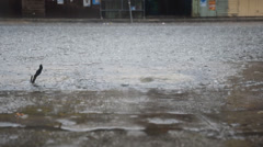 Street flooding after heavy raining Stock Footage