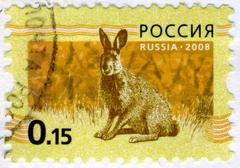 Russia - circa 2008: a stamp printed in russia showing hare bunny circa 2008. Stock Photos