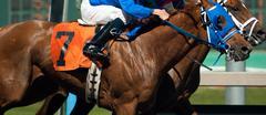 Seven horse rider jockey come across race line photo finish Stock Photos