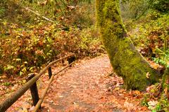 marked path rainforest trail pacific northwest west coast - stock photo