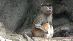 Couple of monkeys who care and give their attention Stock Footage