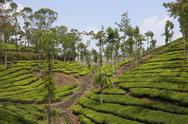 Stock Photo of kerala tea country