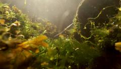 Tidal Current Rushing In and Out Underwater Seaweed and Debris with Sunny Ray Stock Footage