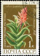 ussr - circa 1972: a stamp printed in ussr show aloe arborescens, series is d - stock photo
