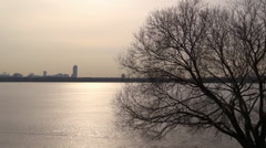Solar path reflected on the frozen surface and picturesque tree Stock Footage