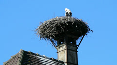 Storks in a nest on a chimney Stock Footage