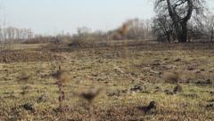 Ukraine, spring, field Stock Footage