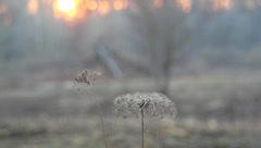 Ukraine, spring Stock Footage