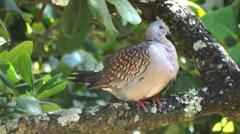 Beautiful pigeon Stock Footage