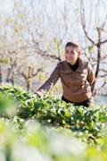 Stock Photo of asia girl at beautiful strawberry farm in the morning at doi angkhang ,chiang