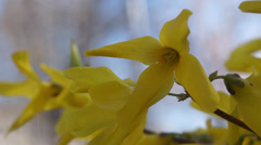 yellow flower - stock footage