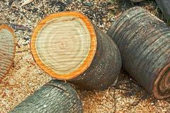 Heap of dried firewood cutting logs Stock Photos