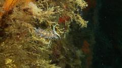Underwater footage anemone hervia 1 corsica corse mediterranean - stock footage