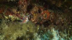 Underwater footage anemone nudib corsica corse mediterranean Stock Footage