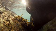 Hiding Behind Boulder Underwater Shining Sun Rays Stock Footage