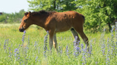 Horse baby grazing the green meadow Stock Footage