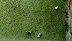 Pigeons seeking their food in the green grass - the view through the window 3 Stock Footage