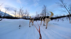 Stock Video Footage of POV Husky dog team animals traversing snow covered winter  landscape Norway