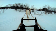 POV Norwegian Sledge Reindeer snow covered Nordic landscape Norway Stock Footage