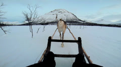 POV Handler Norwegian Reindeer sledge snow covered landscape - stock footage
