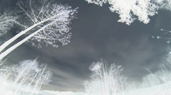 Time lapse, B&W negative, WA, time lapse, storm clouds race across sky,  trees Stock Footage