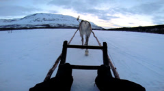 POV Norwegian Reindeer pulling tourists snow covered landscape Norway - stock footage