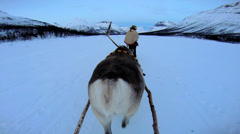 Stock Video Footage of POV Handler with Norwegian Reindeer sunset pulling sledge snow covered landscape