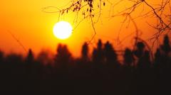 Orange Sunset over small Longleaf Pine trees Stock Footage