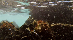 Underwater Mussel Shoals Rocky with Floating Particles Stock Footage