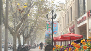 Stock Video Footage of busy tree lined street in the french concession