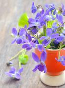 Violets flowers (viola odorata) Stock Photos