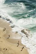 Beach birds eye view - stock photo